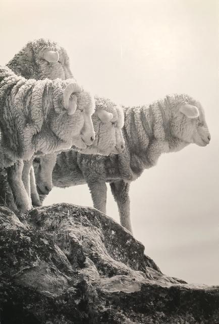 Mouton escorial 1